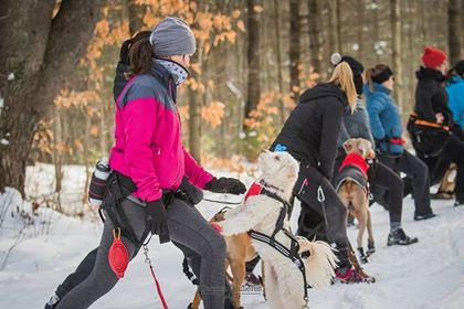 4 bonnes raisons à s'inscrire à notre session d'hiver avec pitou!
