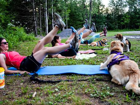 Saviez-vous que nous avons des cours de cani-marche à Terrebonne et à Mirabel?