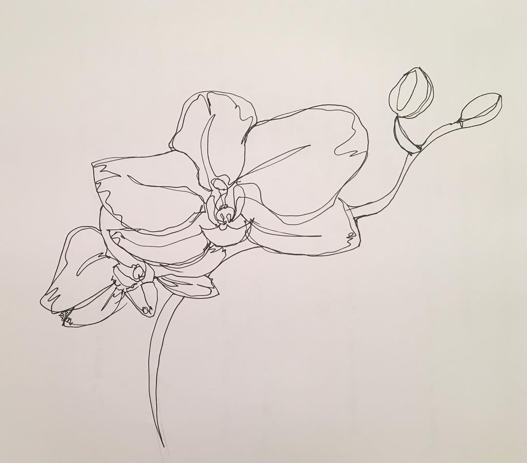 Single line Orchid
