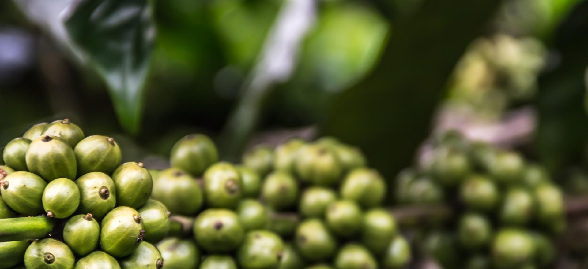 We Herbalist: What We Do