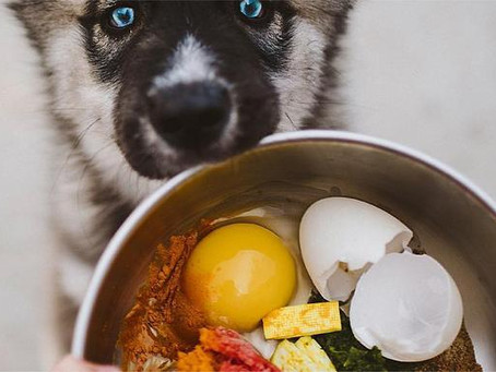 How to Start your Doggo on a Raw Diet Easily
