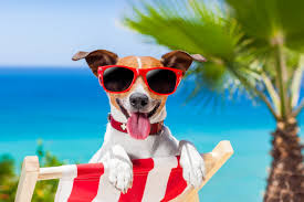 How to Make the Best out of your Summer with your Pups!