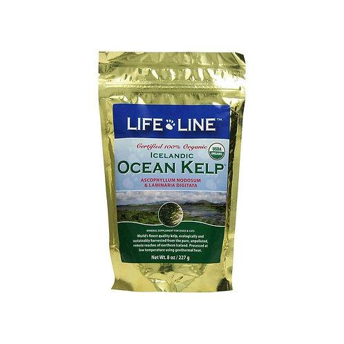 Icelandic Ocean Kelp