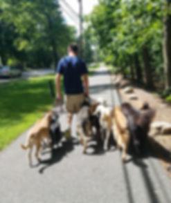 Trainer Sean during a Pack Walk