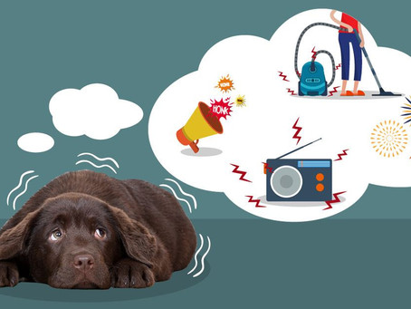 How to Help your Anxious Pups this Summer!!