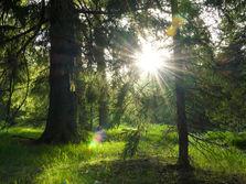 Rogla Forest, Slovenia