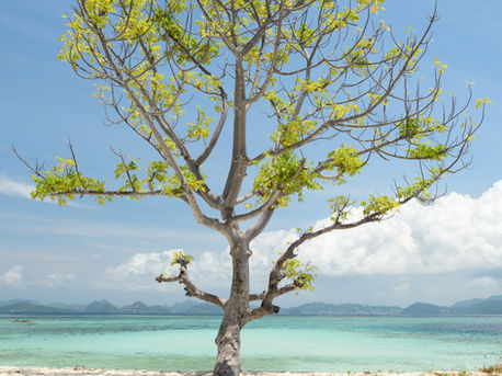 Salty Tree, Pulau Kelor, Indonesia