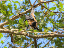 Bat on the Tree