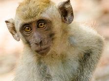 Snappy monkey