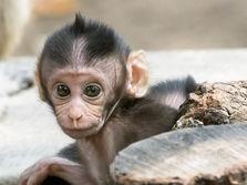 Baby monkeys play