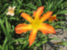 15-07 (07-08A_x_07-08B)_IMG_7595.JPG