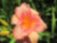 14-03A (07-13_x_07-10)_IMG_IMG_7611.JPG