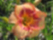 14-03E (07-13_x_07-10)_IMG_6978.JPG