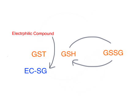 Glutathione and Glutathione-S-Receptors in Male Fertility - Naturopathic Medicine in Ottawa