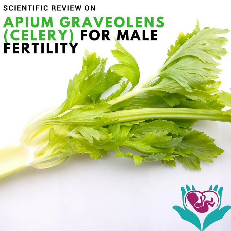 Apium graveolens, fertility, male, vegetable, green, naturopath