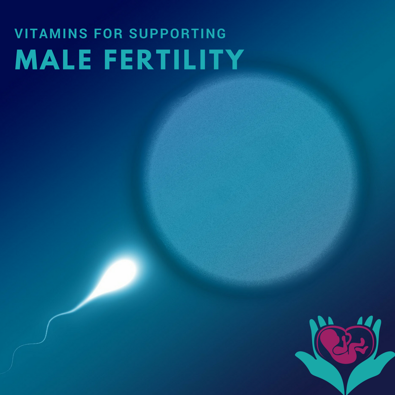 sperm, oocyte, conception, fertility and vitamins