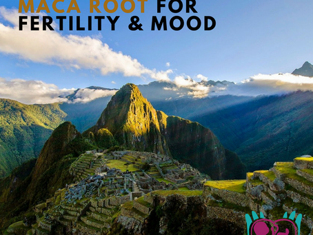 Scientific Review: Maca Root for Fertility and Mood