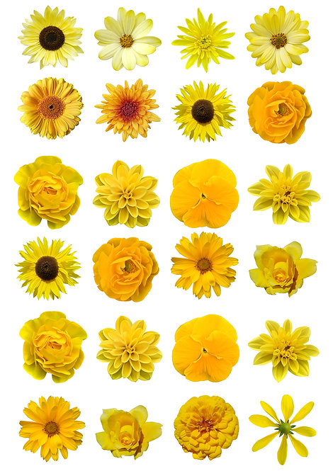 24 Gorgeous Yellow Mixed Flowers Cake Toppers Edible Thin Wafer Paper