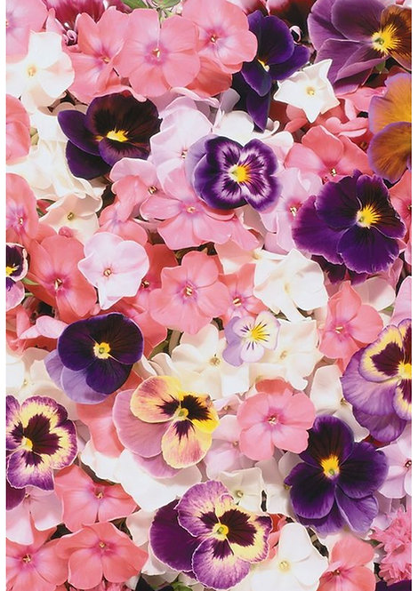 1 x A4 Pink Pansies Floral Wallpaper Decor Icing Sheet
