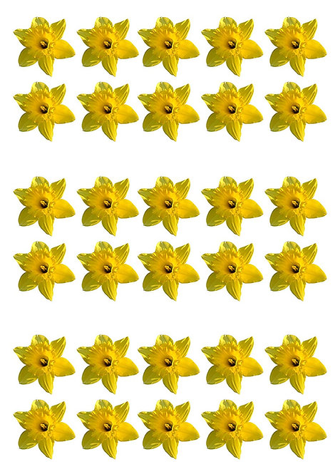30 Daffodil Flower Toppers Edible Thin Wafer Paper