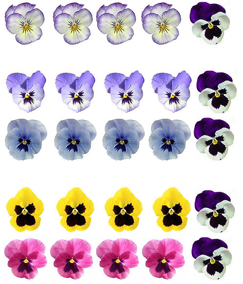 25 Pansy Flower Toppers Edible Thin Wafer Paper