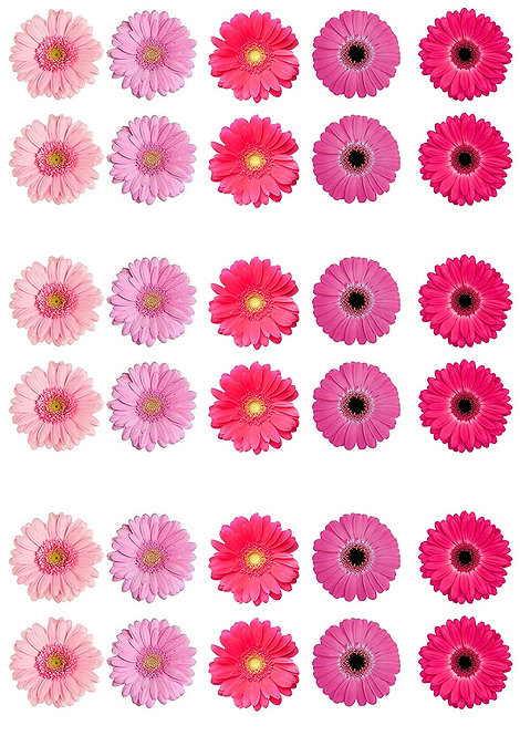 30 Pink Gerbera Flower Toppers Edible Thin Wafer Paper