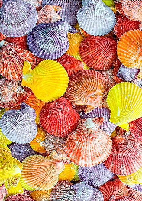 1 x A4 Colourful Seashells Wallpaper Decor Icing Sheet