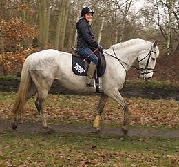 Horse Pic .jpeg