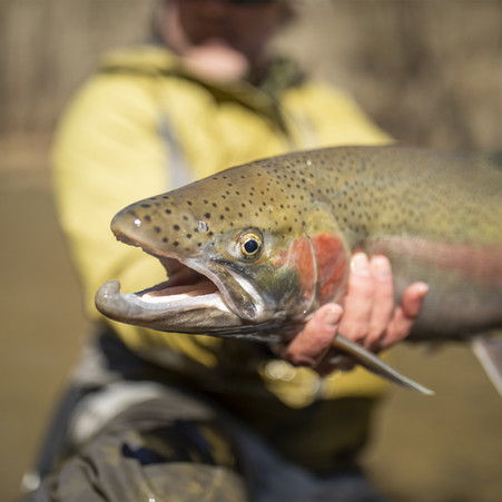 Ohio Fly Fishing Forecast - 4/1/21