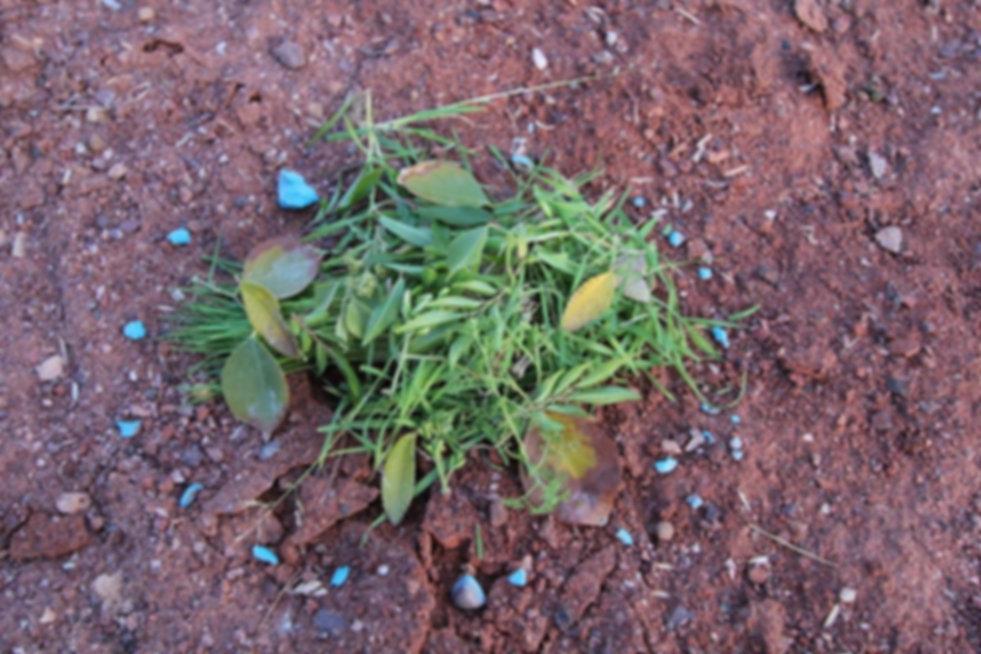 susan plant.jpg