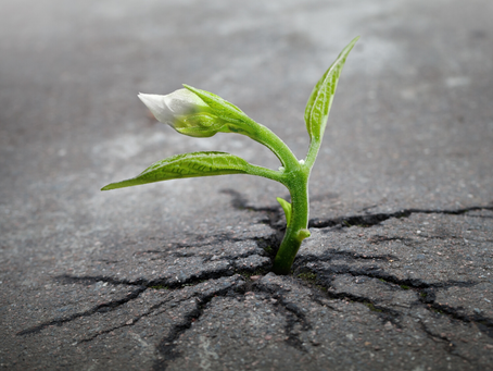 Growing Pains of Leadership Development