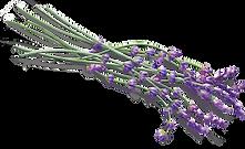 lavendar4_edited.png