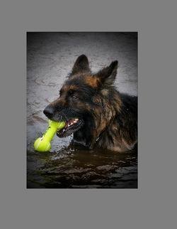 GSD tennis ball2