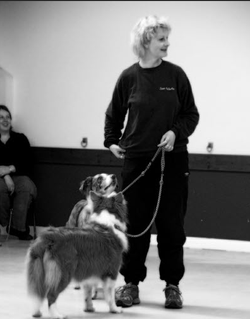 denise and dogs