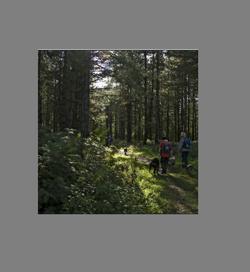Forest Walk2