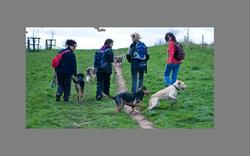 back photo of group walk2