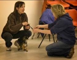 little dog teaching