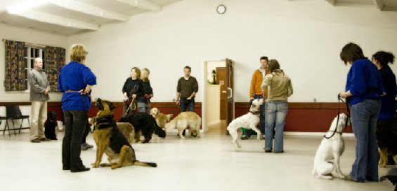 class training lots of dogs 3