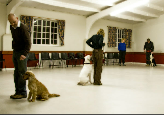 class training lots of dogs 2