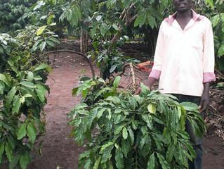 Microfinance / KIVAへの取組み状況