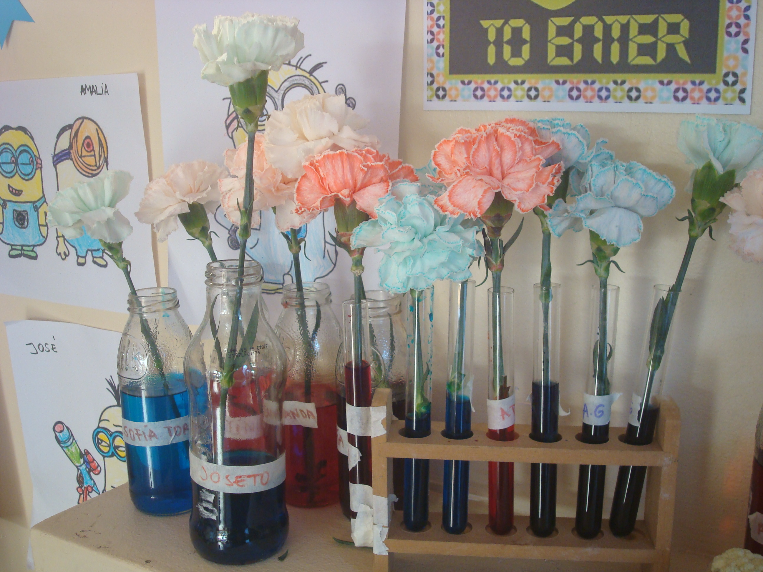 Día de Ciencias: cómo teñir una flor