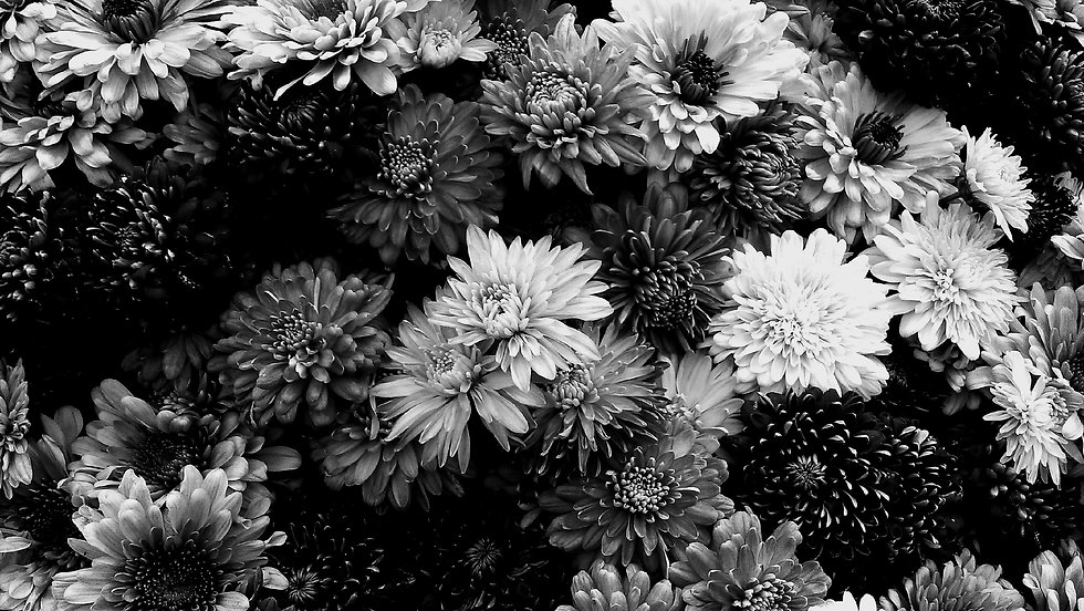 assorted-beautiful-bloom-1158783_edited_