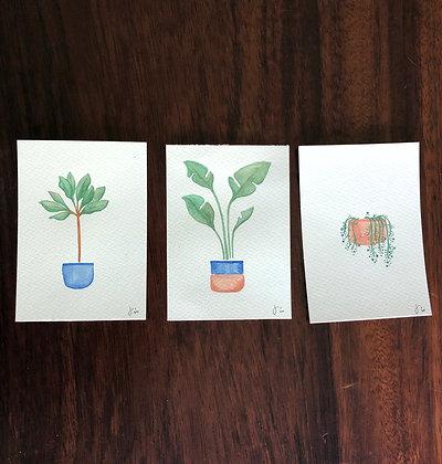 Set: plantas de interior