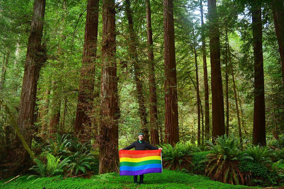 RedwoodNationalParkTallTreesGroveWithRai