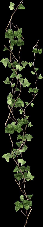 31-317263_plant-vine-ivy-free-clipart-hd