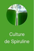 Culture de Spiruline