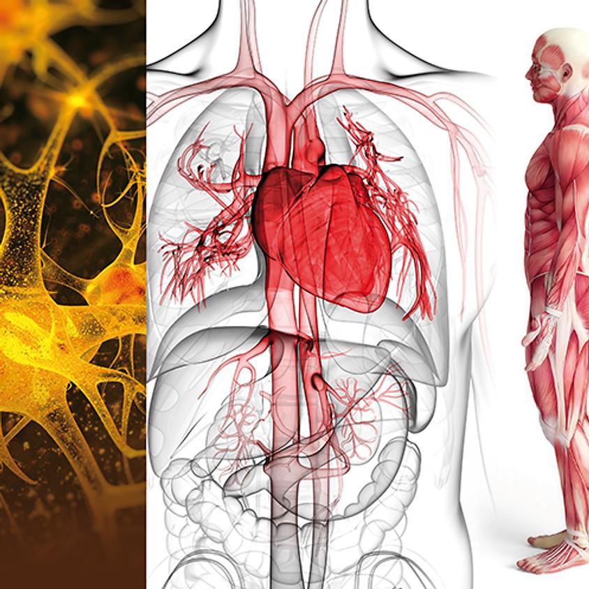Anatomie, Physiologie, Pathologie