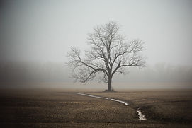 Foggy Tree 5 12x18 (1 of 1).jpg