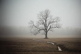Foggy Tree 5 12x18 (1 of 1).jpg
