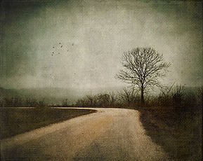 Tree-with-road2-8x10.jpg